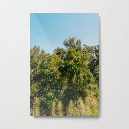 Savannah Egrets Metal Print