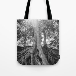 The Root Tree in Greenville, SC Tote Bag