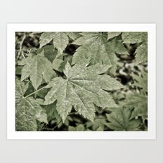 Leaves on the Misty Mountain Top. Art Print