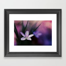 Spring Beauty Framed Art Print