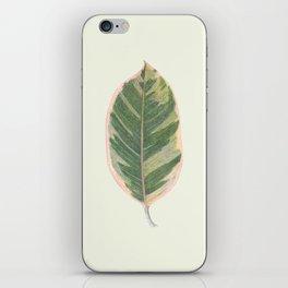 Rubber Tree Ficus Elastica Variegata iPhone Skin