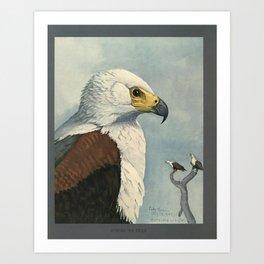 Album of Abyssinian Birds & Mammals 1930 (African Sea Eagle Art Print