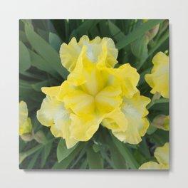 Yellow Iris by Teresa Thompson Metal Print