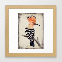 Hoopoe Framed Art Print
