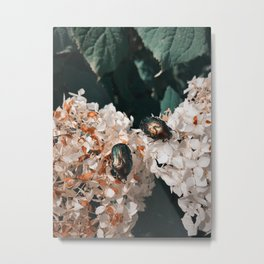 Bugs on Hydrangea Metal Print