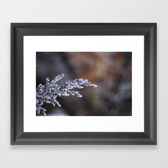 Frosted Juniper Framed Art Print
