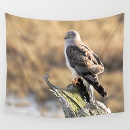 Sunlit Profile of a Northern Harrier Hawk on Driftwood Wall Tapestry