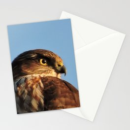 Young Cooper's Hawk Stationery Cards