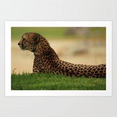 cheetah Art Print