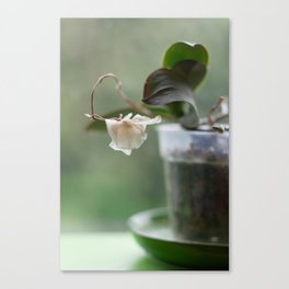 Faded Orchid Canvas Print