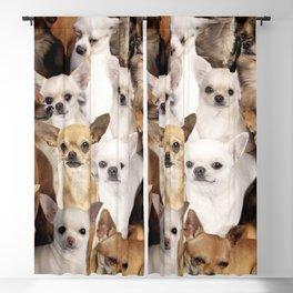 Chihuahuas Blackout Curtain