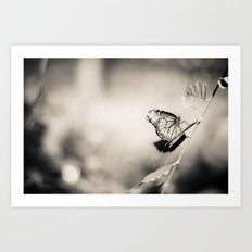 Black and White Butterfly. Art Print