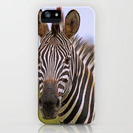 Zebra portrait, Africa wildlife iPhone Case