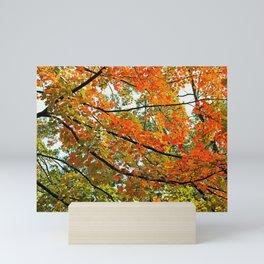 Shine On Mini Art Print