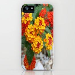 Macro Of Shrub Verbenas or Lantanas (Lantana Camara)  iPhone Case