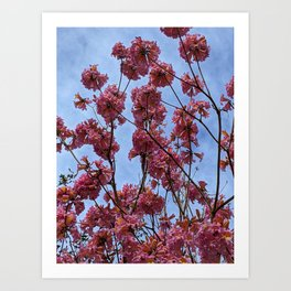Spring Time Blooms Art Print
