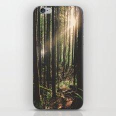 Sun in the Rainforest iPhone & iPod Skin
