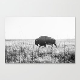 Bison strut Canvas Print