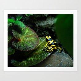 Leucomelas Poison Dart Frog Art Print