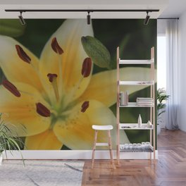 Asiatic Yellow Lily Wall Mural
