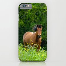Horse in a pature iPhone 6s Slim Case