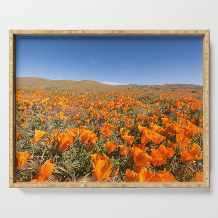 Blooming poppies in Antelope Valley Poppy Reserve Serving Tray