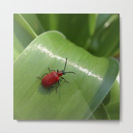 little red beetle IX Metal Print