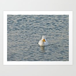 Duck Alone Art Print
