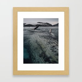 Playful Humpback Framed Art Print