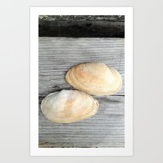 Two Deer Isle Shells Art Print
