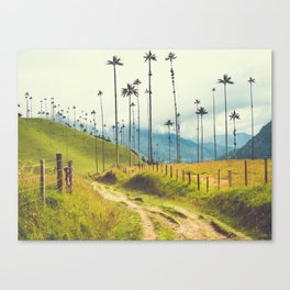Wax Palms Tower over Colombian Coffee Plantation Fine Art Print Canvas Print