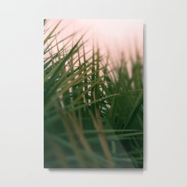 Sunset Palmettos Metal Print