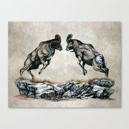 Fighting Bighorn Sheep Rams Canvas Print