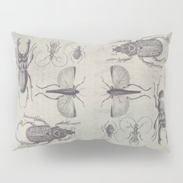 Vintage Beetles And Bugs Pillow Sham