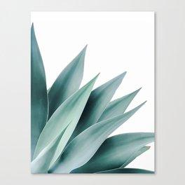 Agave flare II Canvas Print