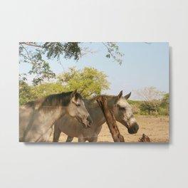 Costa Rica Horses Metal Print