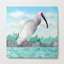 Crested Ibis - Splendid Japanese Tall Bird  Metal Print