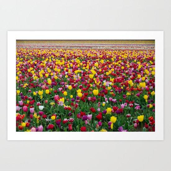Fields of Color II, Woodburn Tulip Festival Art Print