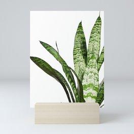 Snake Plant Leaves - Sansevieria Mini Art Print