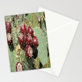 Catus Stationery Cards