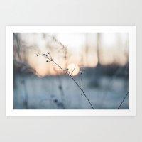 Frosty Foliage in Morning Light Art Print