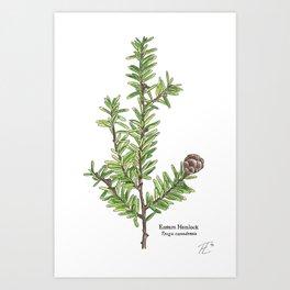 Eastern Hemlock (Tsuga canadensis) Plate II Art Print