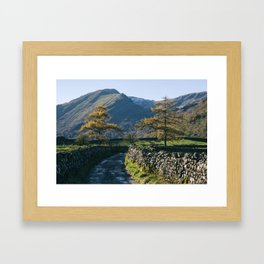 Larch trees and remote road to Thorneythwaite Farm, Borrowdale. Lake District, UK. Framed Art Print