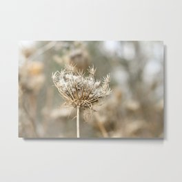 Queen Anne's Lace, in Winter Metal Print