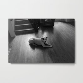 Dawg: 3 Metal Print