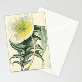1479 Stationery Cards