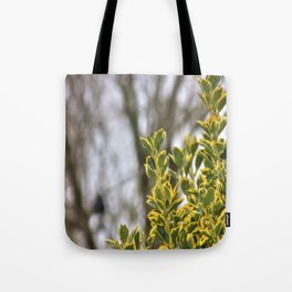 That Winter Feeling Tote Bag