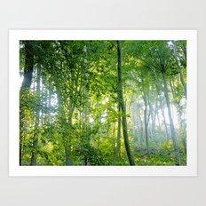MM - Sunny forest Art Print