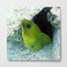 Watercolor Eel, Green Moray Eel 01, St John, USVI, Peek-A-Boo! Metal Print