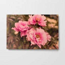 Pink  Peony Flower Metal Print